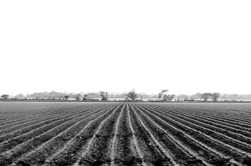 Straight field is straight